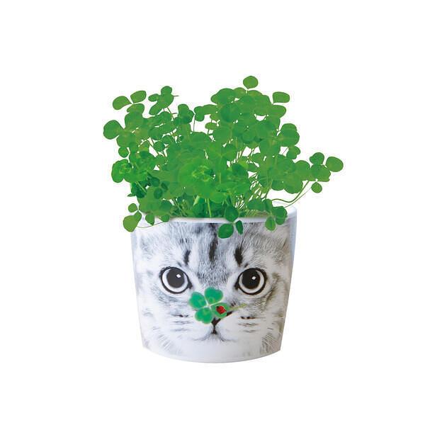 ハナ&アニマルズ ネコ 四つ葉のクローバー
