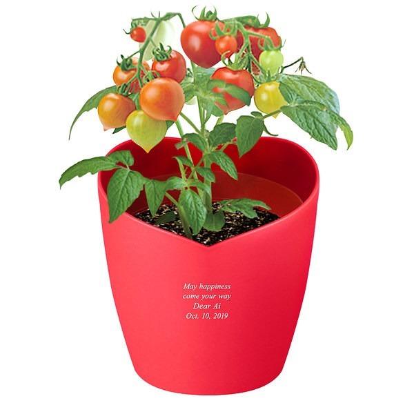 ハートポット栽培キット ミニトマト